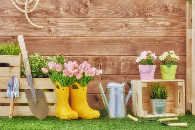 Gardening tools on the grass in the backyard. Fresh flowers and plants in the spring, stock photo