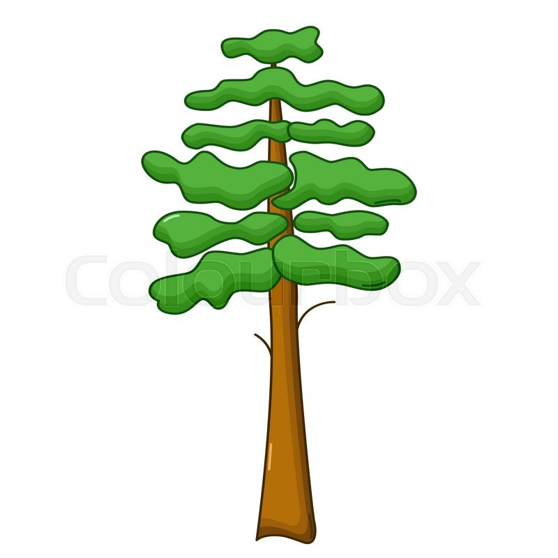 Pine Tree Icon In Cartoon Style Isolated On White Background
