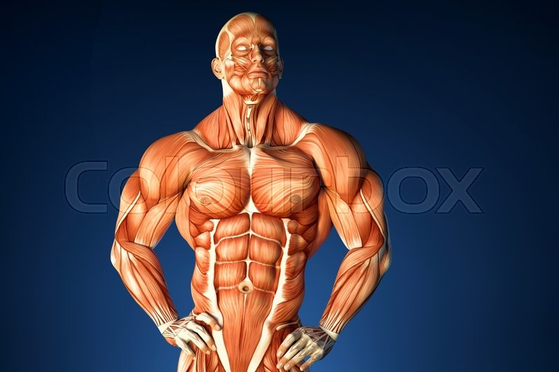 Bodybuilder Anatomy 3d Illustration Contains Clipping Path Stock