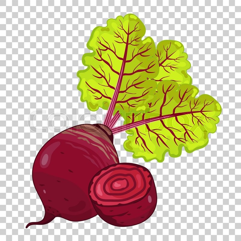 beet isolated  beet on transparent background beet icon green leaf wreath clipart green leaf clipart png