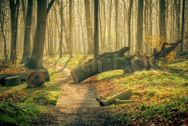 Springtime in the forest with shining sun, stock photo
