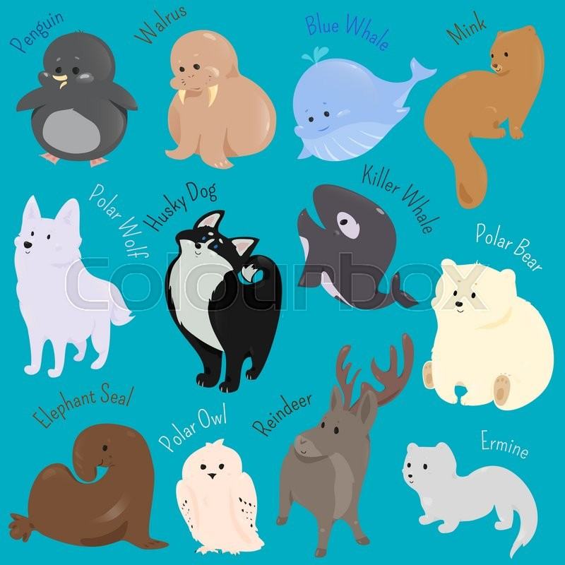 set of cute cartoon winter north animal icon vector free killer whale clipart killer whale clip art word