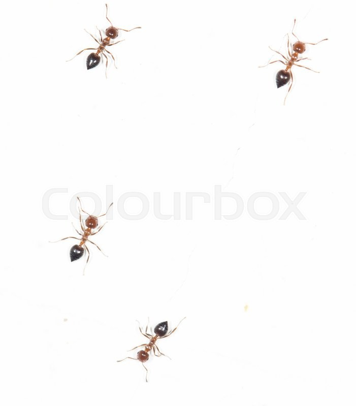 how to get ants out of your walls