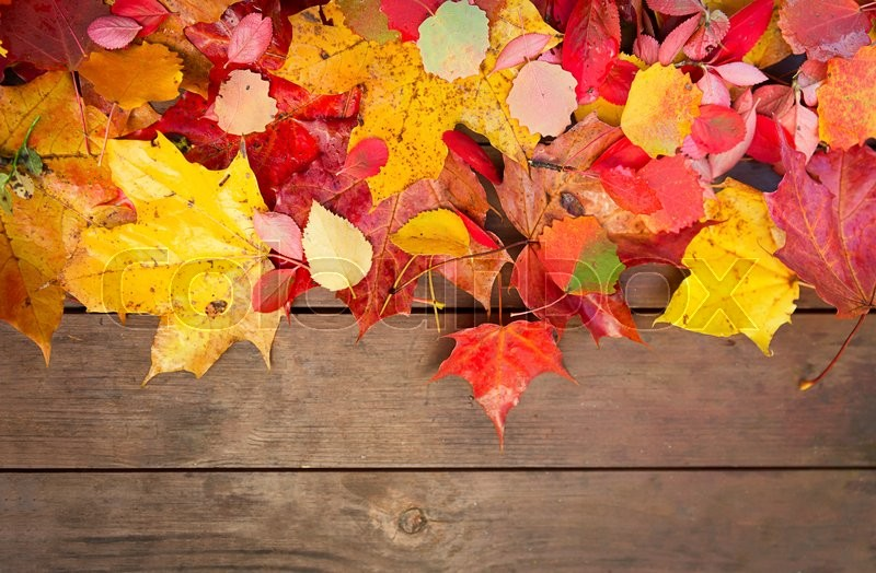 Image result for images of fall leaves