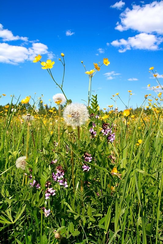Stock image of 'Flowerses on field'