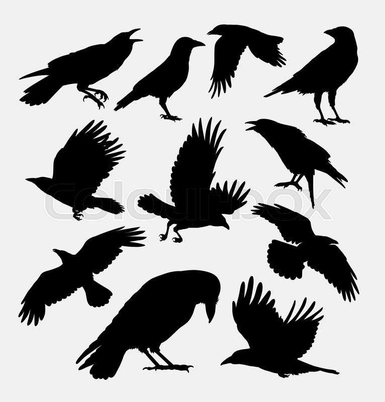 Crow bird, poultry animal silhouette. Good use for symbol ...