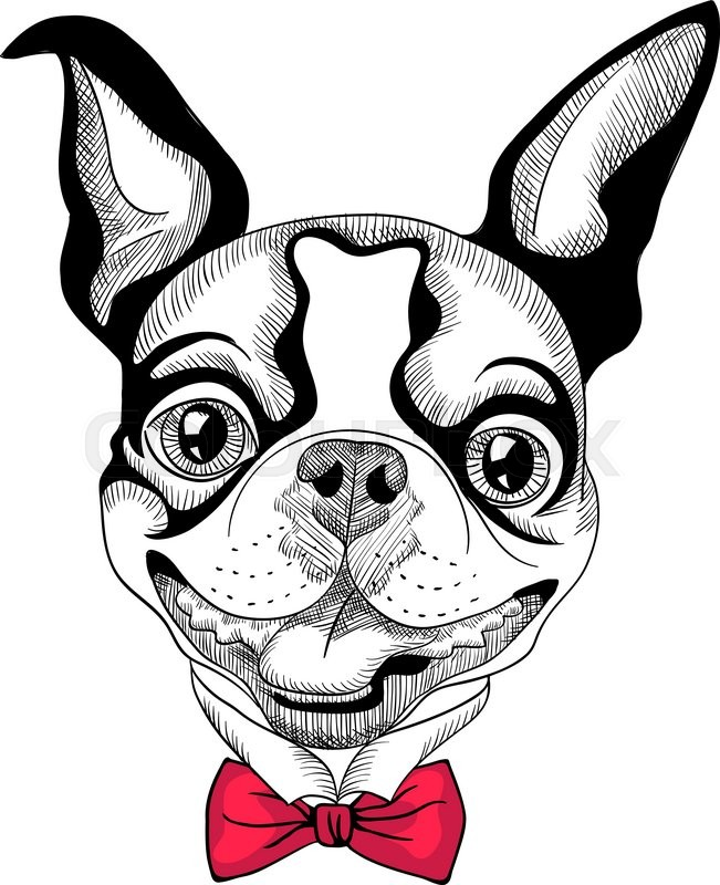 Funny cartoon hipster Boston Terrier breed smiling | Stock Vector ...