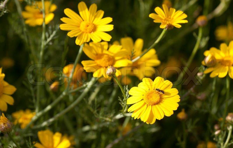 Beste Spielothek in Gelbe Weiden finden