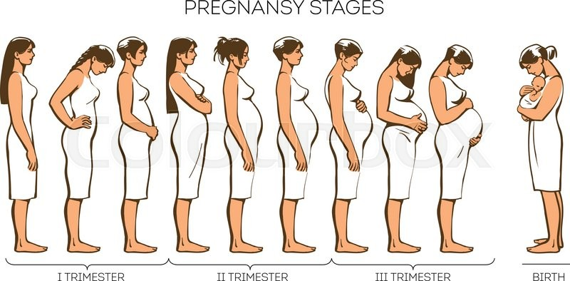 stages of pregnancy vector image of stages of pregnancy pregnant woman motherhood trimester. Black Bedroom Furniture Sets. Home Design Ideas