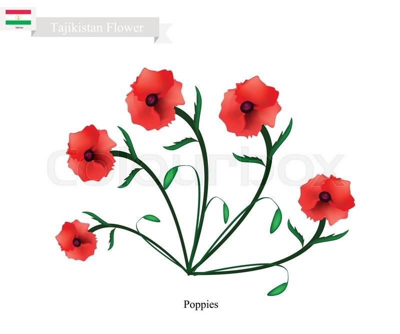 Tajikistan flower illustration of red poppy flowers one of the tajikistan flower illustration of red poppy flowers one of the most popular flower in tajikistan stock vector colourbox mightylinksfo
