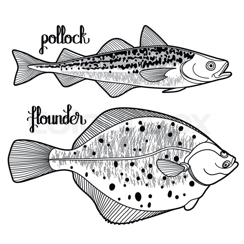 Polock And Flounder For Seafood Menu Sea Ocean Creatures Isolated On White Background Coloring Book Page Design Vector