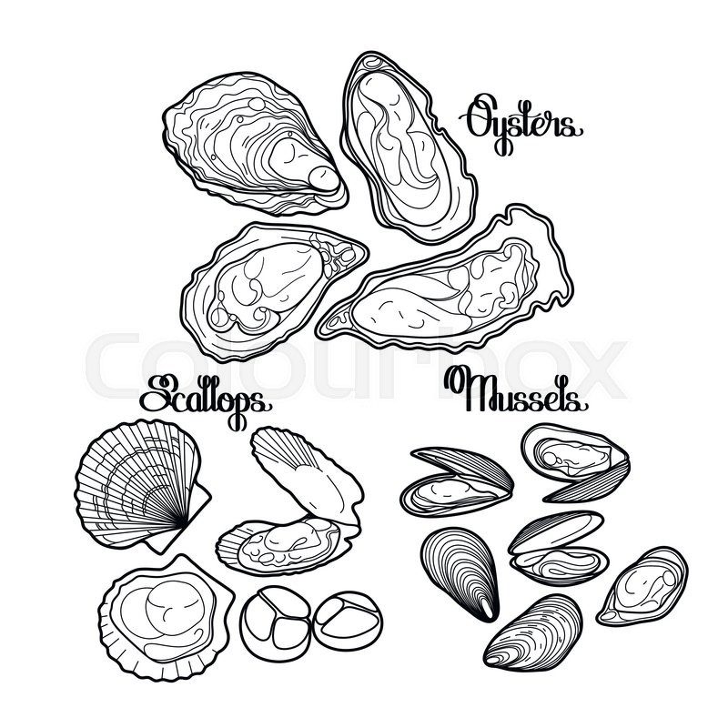 Graphic vector mussels, oysters and scallops drawn in line art style ...
