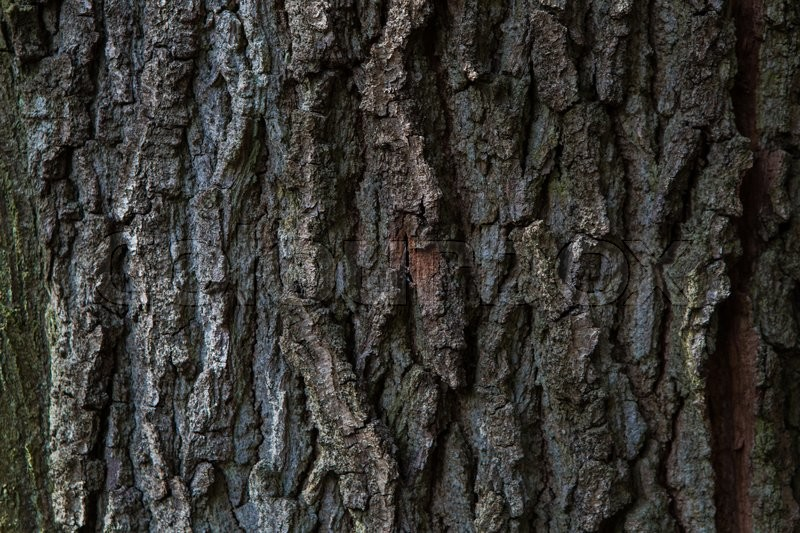 Dark brown green tree material structure, stock photo