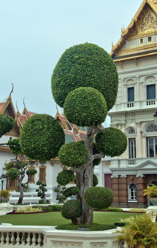 bonsai baum vor dem grand palace in bangkok thailand stockfoto colourbox. Black Bedroom Furniture Sets. Home Design Ideas