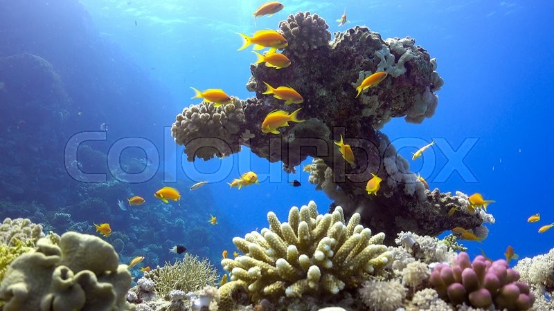 Tropical Fish On Vibrant Coral Reef Underwater Scene
