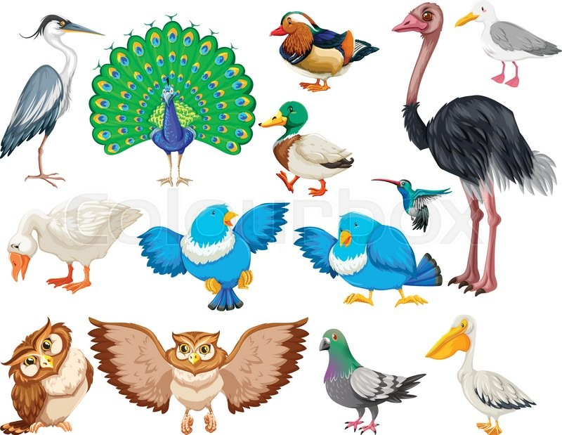 essay on different types of birds A bird nest is the spot in which a bird lays flamingos make a different type of specific soil types may favour certain species and it is speculated that.