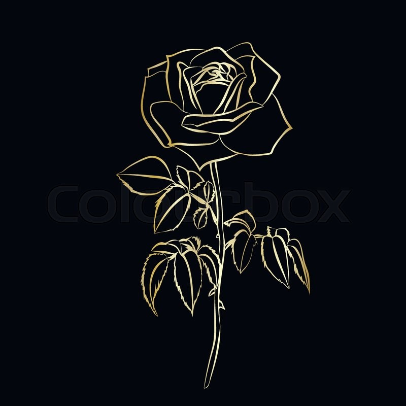 Rose sketch golden outline on black background vector for How to make black roses