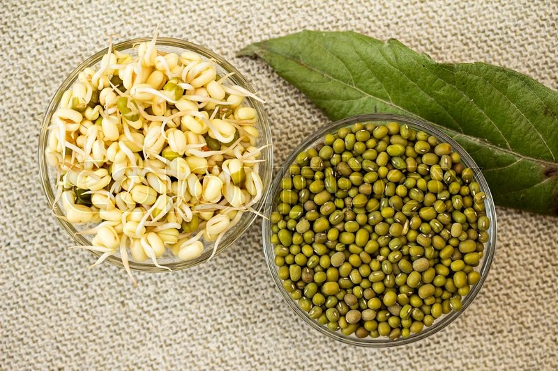 Growing mung bean sprouts. Mung bean sprouts and mung bean dry, stock photo