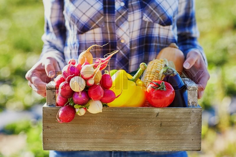 Woman holding wooden crate with fresh organic vegetables from farm, stock photo