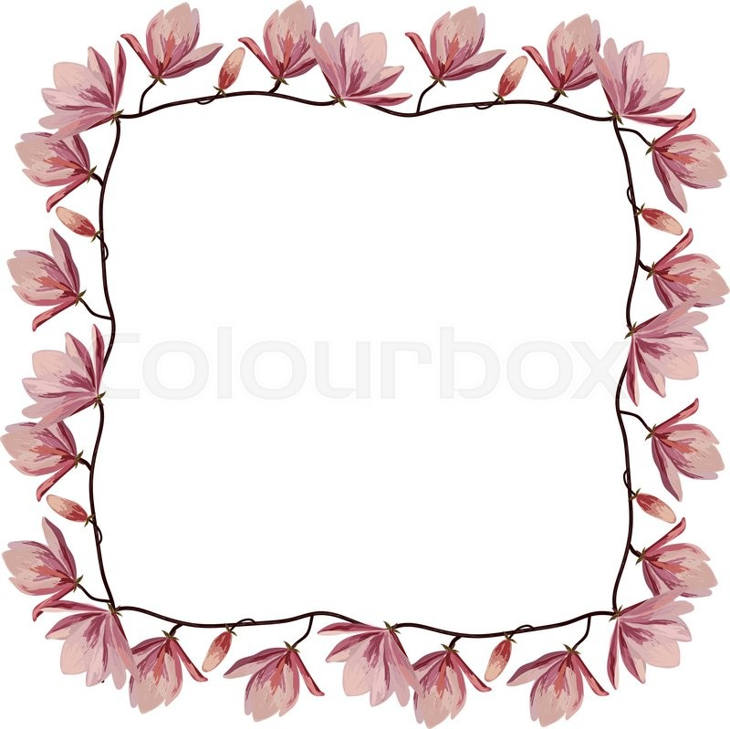 Beautiful corner frame with pink magnolia flowers isolated on white ...