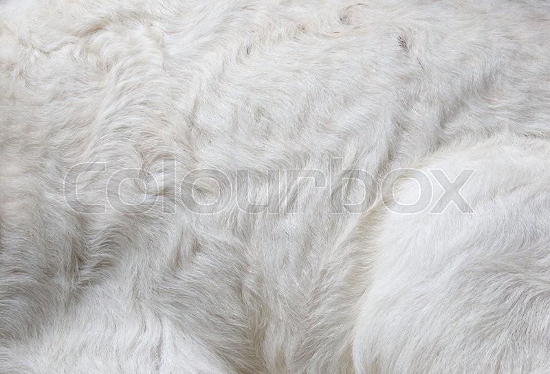 New born sheep,Abandoned new-born lamb, stock photo