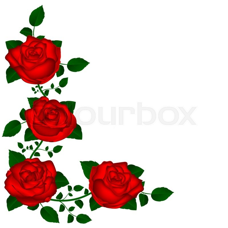 vine of red roses vine of red roses stock vector