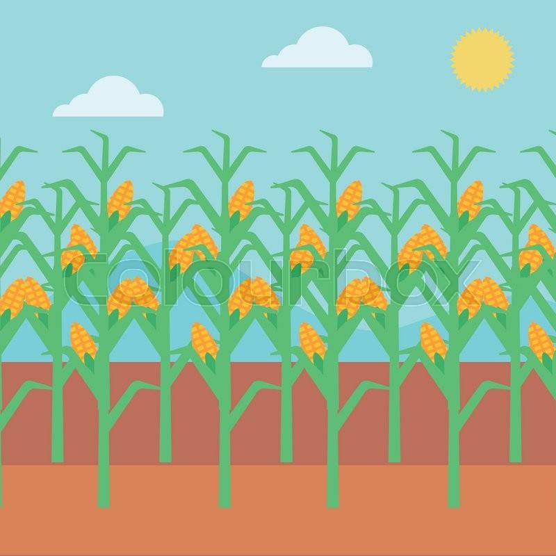 Background of corn field vector flat design illustration