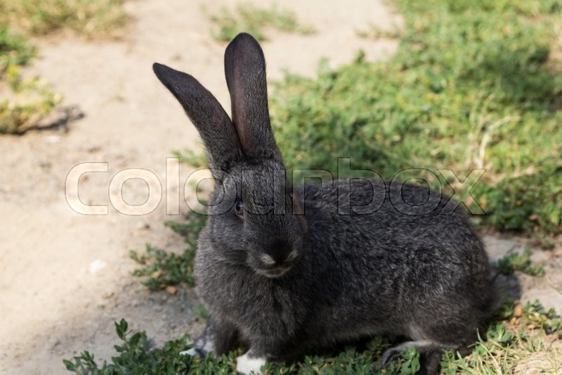 Rabbit sitting on green grass and digs a hole, stock photo