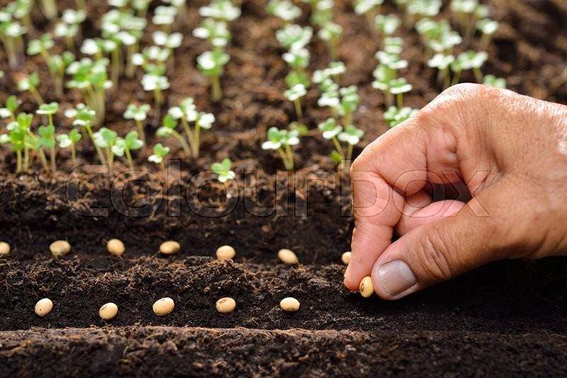 Farmer\'s hand planting seed in soil, stock photo