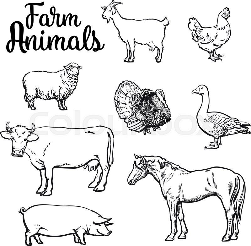 Farm Animals Cow Pig Chicken Stock Vector