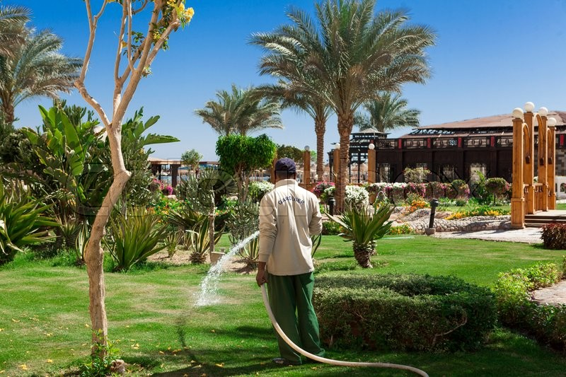 Gardener watering hose green lawn in the hotel in Egypt, stock photo