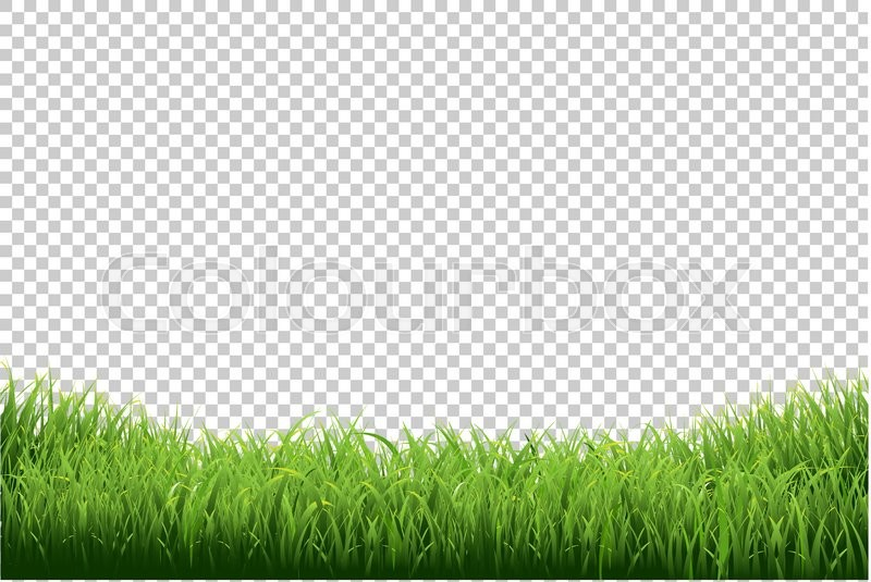 Green Grass Border Isolated On Transparent Background With Gradient Mesh Vector Illustration