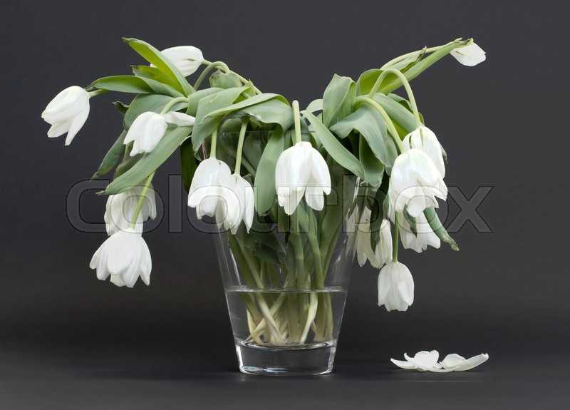 Vase full of droopy and dead flowers white tulips stock photo vase full of droopy and dead flowers white tulips stock photo colourbox mightylinksfo