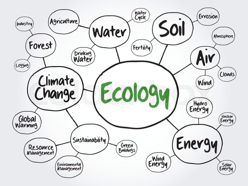 ecology mind map flowchart concept for