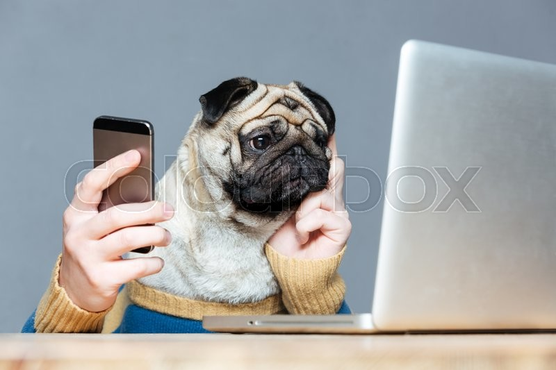 Dog In Bed With Cell Phone