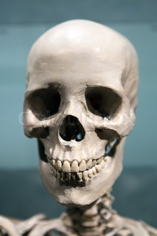 Old bony skeleton skull under dramatic lighting Stock Photo Colourbox