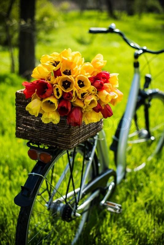 Ромашек, букеты купить в могилев велосипед