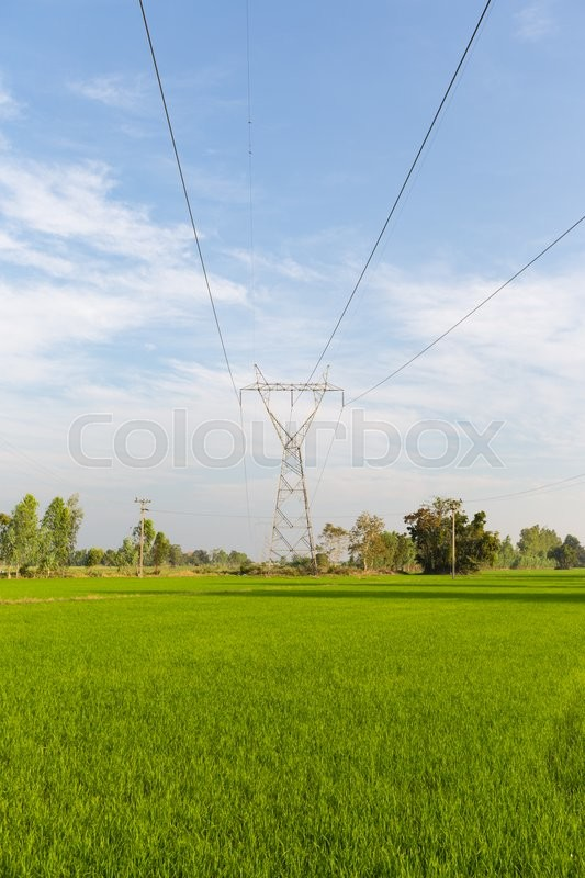 Power transmission towers in the rice fields. Power transmission towers from power plants through the rice fields, stock photo