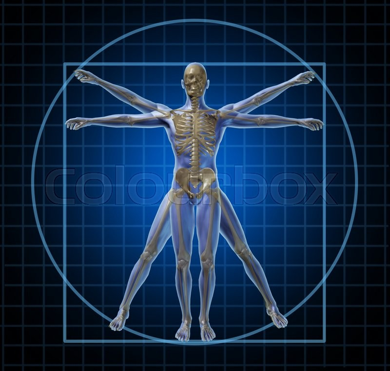 Vitruvian Human Skeleton Man And Body With As A Frontal Leonardo Da