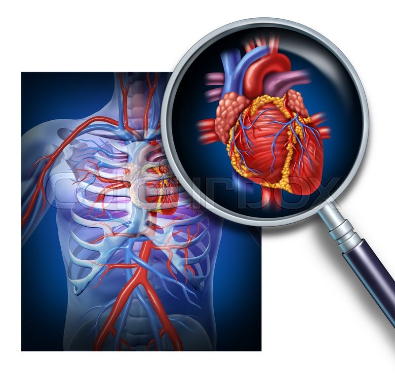 Anatomy Of The Human Heart As A Focus And Magnification Of The