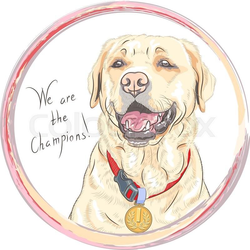 Smiling happy yellow dog. Dog breed Labrador Retriever champion in ...