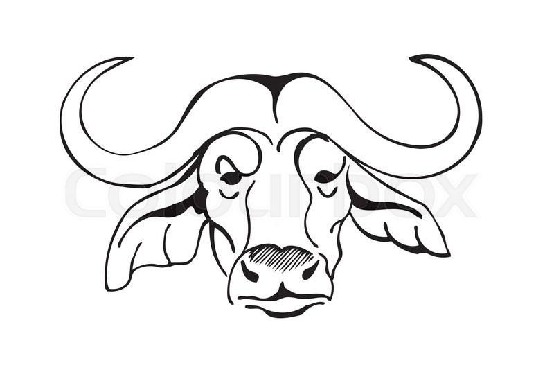 African buffalo head, ...