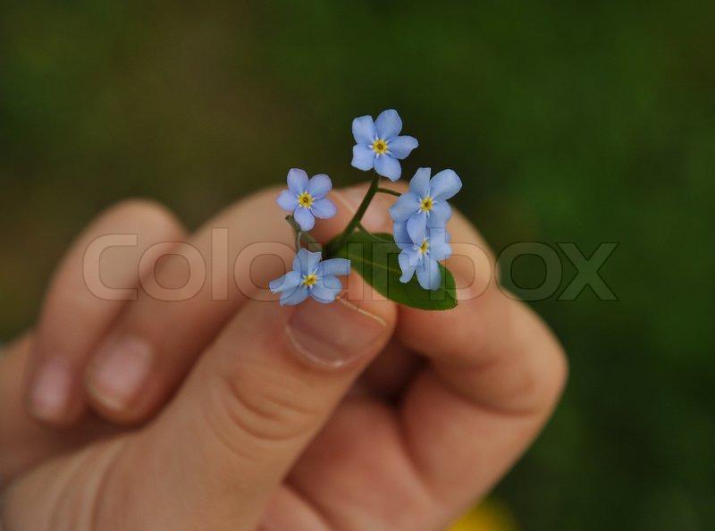 Kind mit Blume in der Hand   Stockfoto   Colourbox