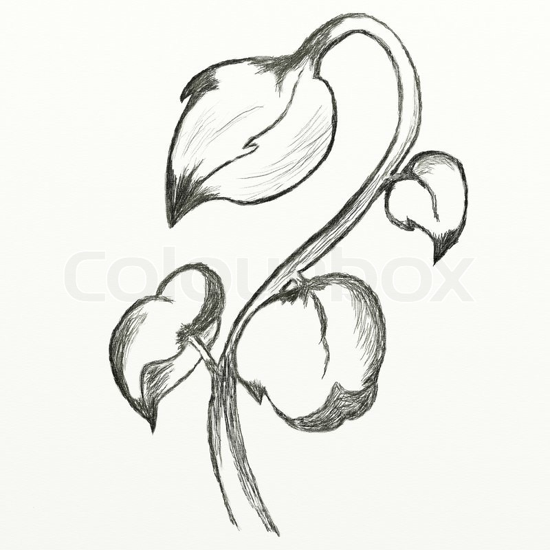 Flowers sketch this is picture drawed with pencil stock photo