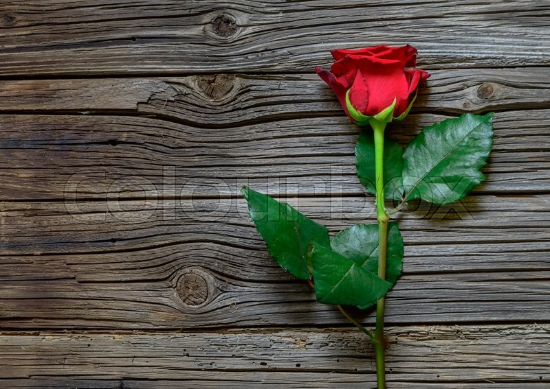 Single lovely red rose on stem with green leaves against knotted dark wood slats, stock photo