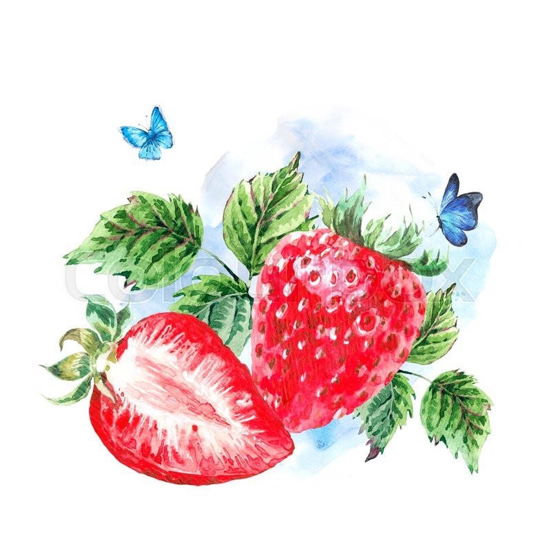 Hand painting summer watercolor strawberry nature eco greeting card hand painting summer watercolor strawberry nature eco greeting card on white background botanical berries illustration stock photo colourbox m4hsunfo