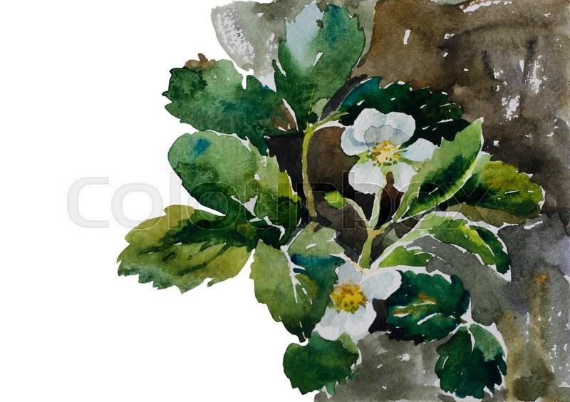Botany Illustration Strawberry Plants On Flowerbed Blossoming