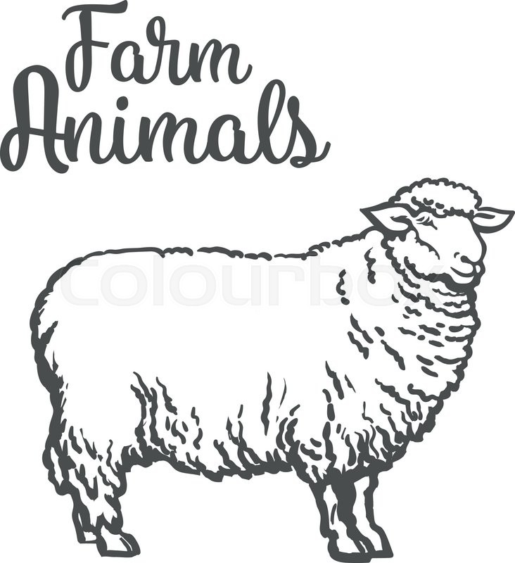 white sheep isolated vector sketch drawn by hand on a light background sheep farm animals cloven hoofed livestock sheep sheep icon with thick fur