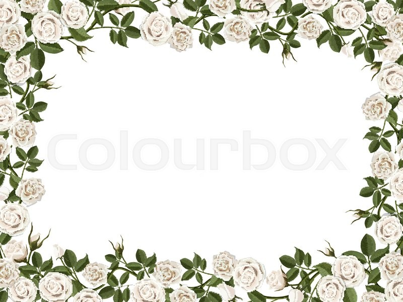 Square border of white roses. Vector decorative floral frame with ...