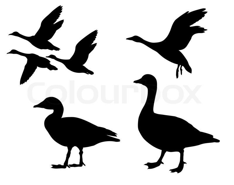 vector silhouette geese on white background stock vector colourbox